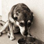 1367393_abandoned_dog