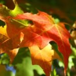 1406585_fall_colors